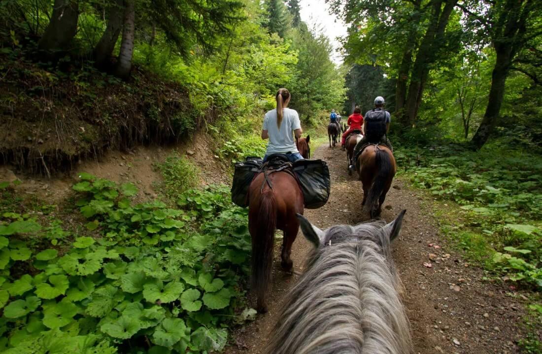 Конные прогулки в Сочи