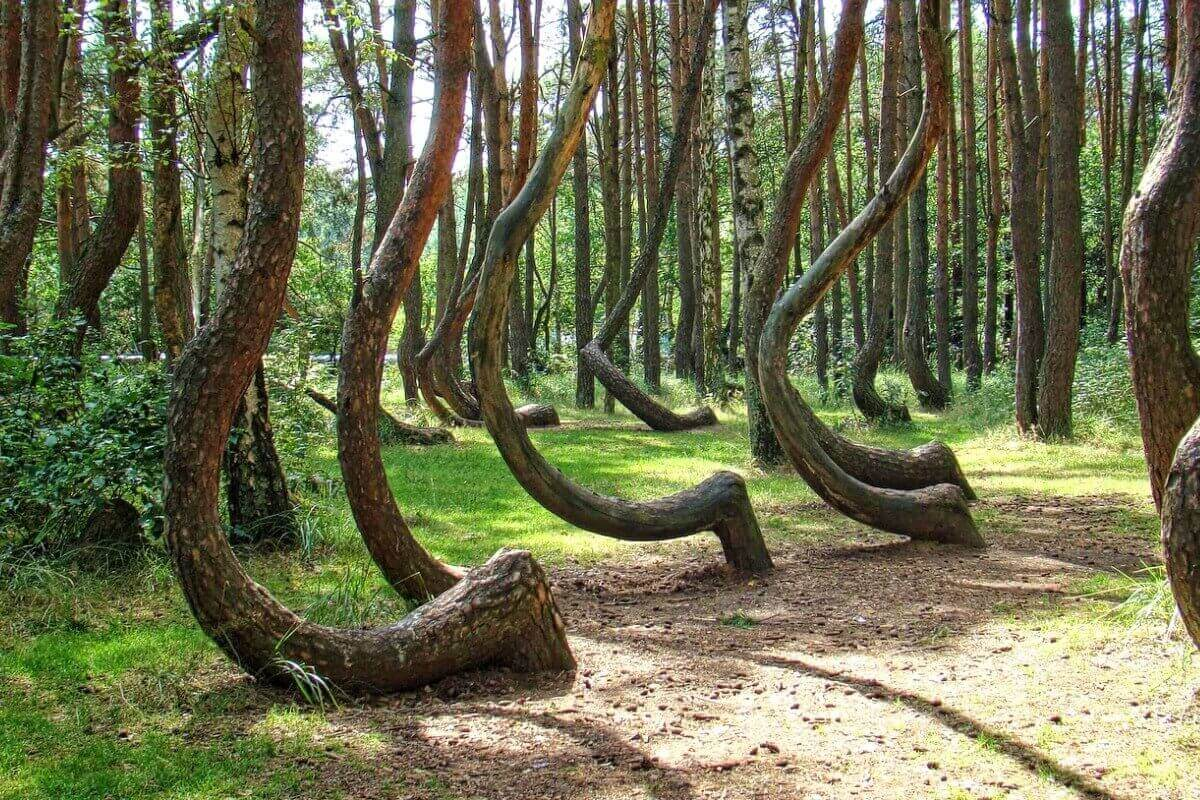 Экскурсия в Танцующему лес